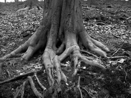 ridgeway-tree
